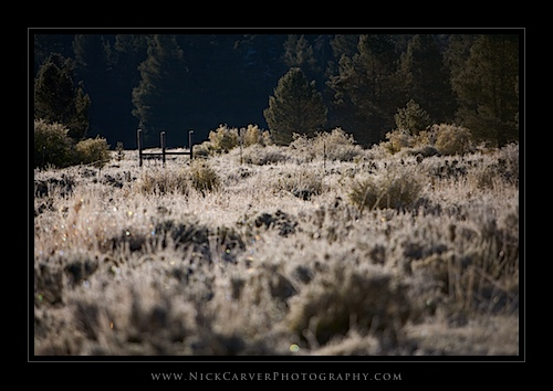 Fence in Hessian Meadow at sunrise