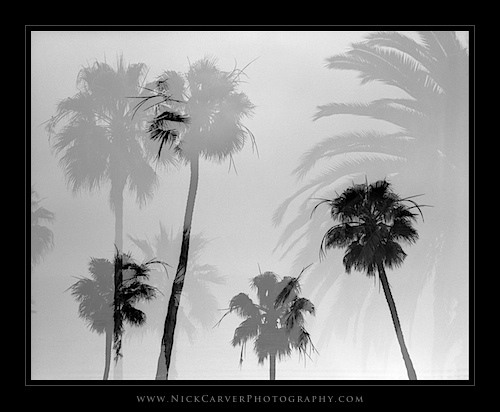 Abstract Photography: Palm Trees in Laguna Beach