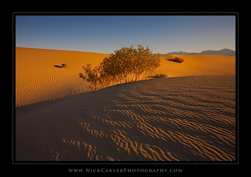 Mesquite Flat Sand Dunes at sunrise in Death Valley National Park, CA