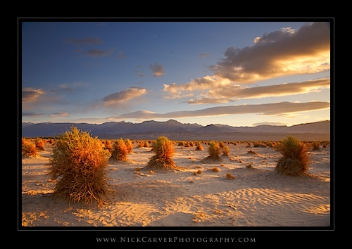 Devil's Cornfield at sunrise in Death Valley National Park, CA