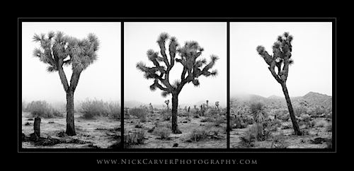 Joshua Tree National Park Fine Art Photography