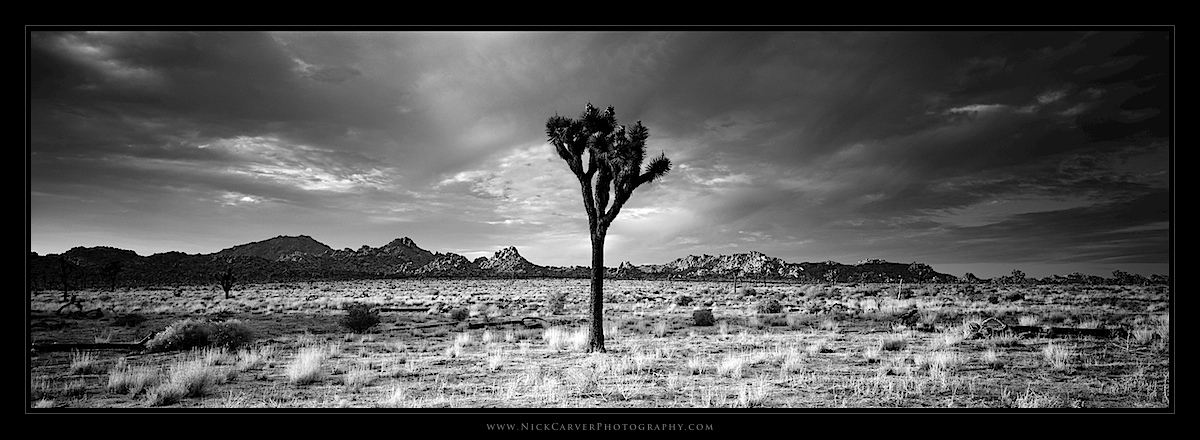 Joshua tree national park fine art landscape photography