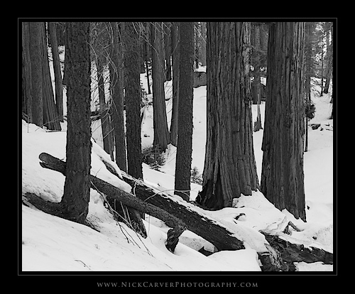 Sequoia National Park in winter