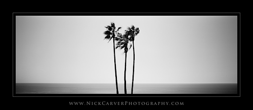 Palm Trees at Heisler Park in Laguna Beach, CA