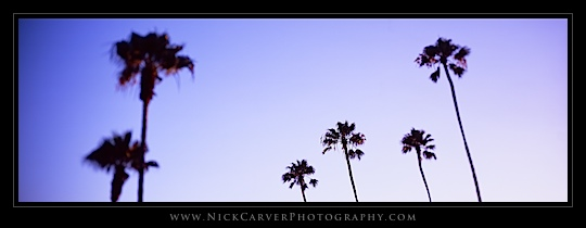 Palm Tree Pictures from Laguna Beach, CA