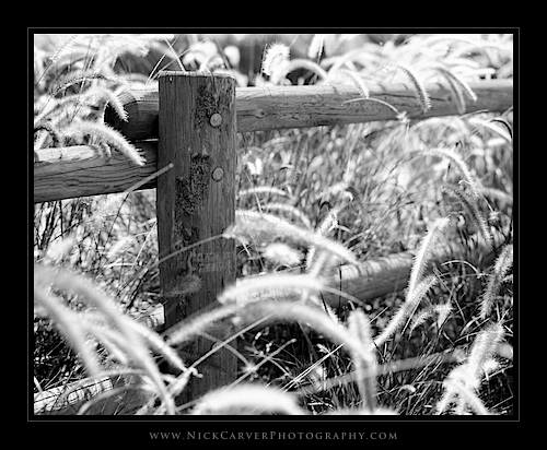 Photo a Day Challenge: Day 10 - Wooden Fence on Ilford Delta 100 Film