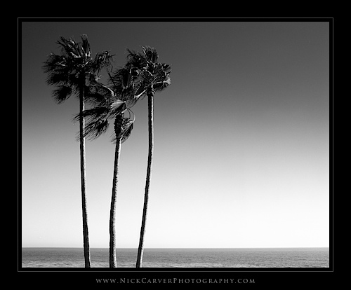 Photo a Day Challenge: Day 23 - Palm Trees and sky on Ilford Delta 100 film