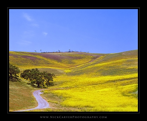 Santa Ynez Valley, May 2014