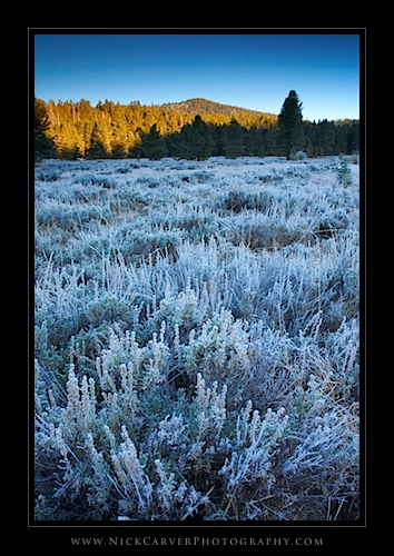 Bakeoven Meadow at sunrise