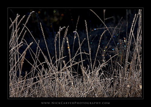 Frosty Plants in Bakeoven Meadow at sunrise