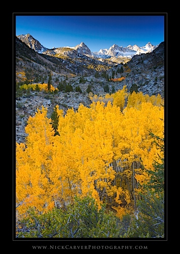 Aspens in the Sabrina Basin in Fall, near Bishop, CA