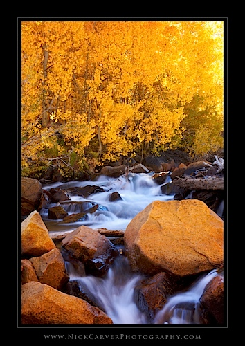 Creek and Aspens in fall - Eastern Sierra Nevada Mountains near Bishop, CA