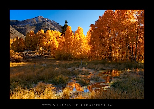 Pond and Aspens in fall - Eastern Sierra Nevada Mountains near Bishop, CA