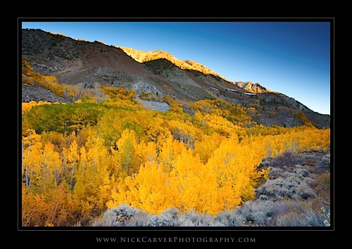 Fall Color in the Eastern Sierra near Bishop, CA