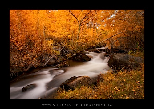 Creek and fall color - Eastern Sierra Nevada Mountains near Bishop, CA